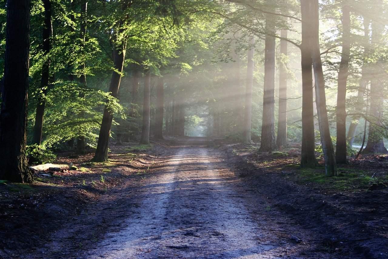 Czy offroad po lesie zawsze jest dozwolony?