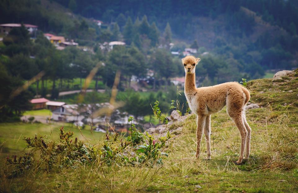 Enduro i cross w Ameryce Południowej – najpiękniejsze trasy!